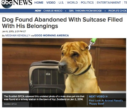 Empathy Pang: The sharpei and his suitcase